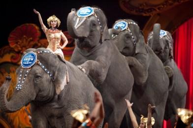 elephants_A