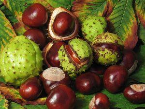 conkersfruit